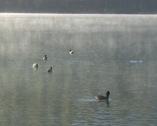 St. Moritz Lake with ducks - stock footage