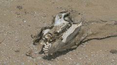 Dead Camel 5 Stock Footage
