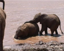 Baby elephant playing in the river Stock Footage