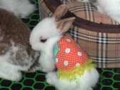Stock Video Footage of Bunnies Wearing Skirts and Sweaters