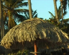 Thatched roof with palm trees Stock Footage