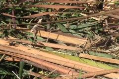 Spider Grasshopper Showdown Stock Footage