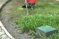 Man Using A Weed Whacker (Grass Trimmer) Stock Footage