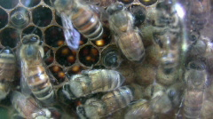 Close up of Bees in Nest Stock Footage
