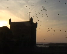 Seagulls above fortress in Essaouira Stock Footage