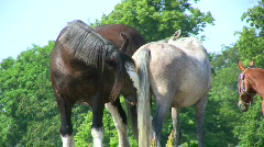 Two horses on a hot summer day Stock Footage