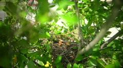 Mockingbird Neighborhood Nest Stock Footage