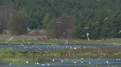 Swamp with birds 2 Stock Footage