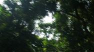 Sun flickering through trees Stock Footage