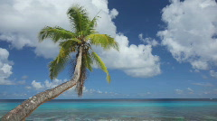 Palmtree and calm sea Stock Footage