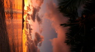 Sunset vertical with palmleafs Stock Footage