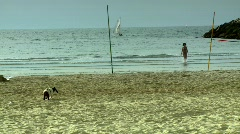 A Dog smelling in the beach - long shot Stock Footage