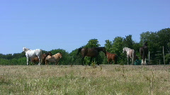 Horses at pasture Stock Footage