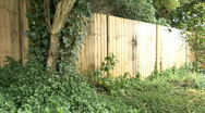 Variegated evergreen tree at the Back Fence Stock Footage