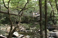Australia Swinging bridge Mossman Stock Footage