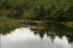 Beaver dam in Alaska Stock Footage