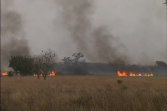 Burning grasses West Africa Stock Footage
