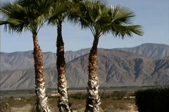 CA Anza Borrego State Park Stock Footage