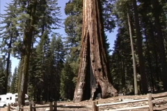 CA Sequoias in Yosemite Stock Footage