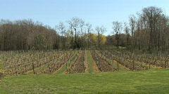 Canadian vineyard  Stock Footage