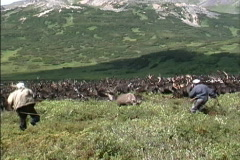 Captured reindeer Siberia Stock Footage