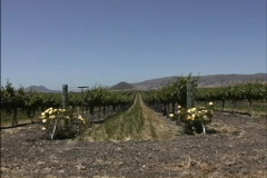 Central Valley vineyards CA Stock Footage