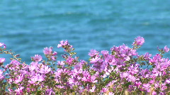Violet flowers against Black sea Stock Footage