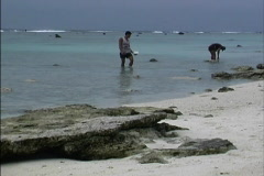 Collecting sea cucumbers Cook Islands Stock Footage