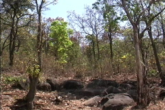 Dry season forest Myanmar Stock Footage