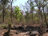 Stock Video Footage of Dry season forest Myanmar