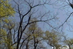 Early spring woods VA Stock Footage