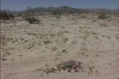 Disturbed desert floor Stock Footage