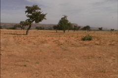 Overgrazed land Sahel Mali Stock Footage
