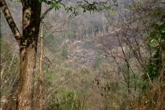 Environmental Issues Slash & burn plot Thailand Stock Footage