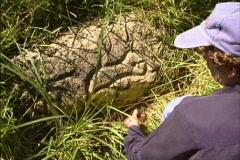 Woman examining petroglyphs  Stock Footage