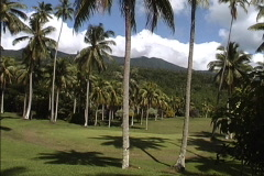Golf course & palms Taveuni Fiji Stock Footage