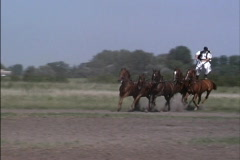 Hungary Man drives five horses Stock Footage
