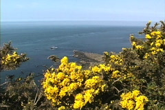 Giants Causeway & gorse - stock footage