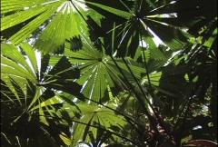 Jungle leaves Australia Stock Footage