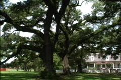 Live oaks & plantation LA Stock Footage