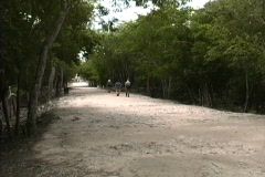 Maya Cities Chichen path to cenote Stock Footage