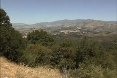 Mediterranean vegetation CA Stock Footage