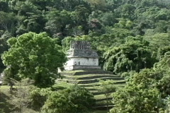 Mexico Temple in jungle Palenque Stock Footage