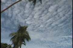 Mid level clouds with palms Stock Footage