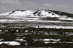 Morocco Goat herd in snow Stock Footage
