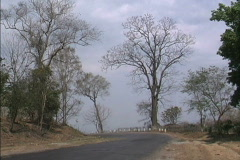 Myanmar Road & dry season trees - stock footage