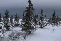 Near arctic tree line Canada Stock Footage