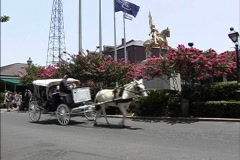 New Orleans Horse & buggies Stock Footage