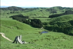 New Zealand pans grassy hills Stock Footage