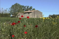 Poppies & stone house in Provence Stock Footage